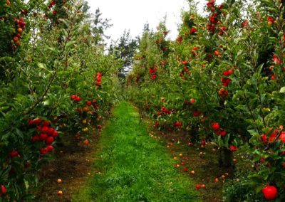 Apple Farm 3