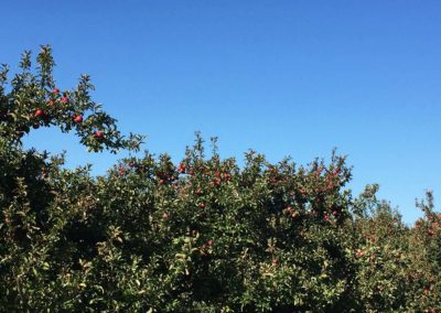 Apple Farm 6